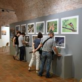 Exposition 2017 (10)